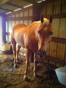 Payable Doc - A rescue horse featured on Carte Blanche By Amelia Curzon
