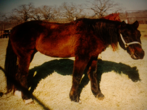 Dusty the rescue horse featured on Carte Blanche by Amelia Curzon